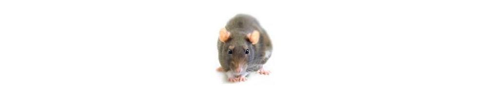 Trampas para ratas tienda plagas online - Trampas para cazar ratas ...