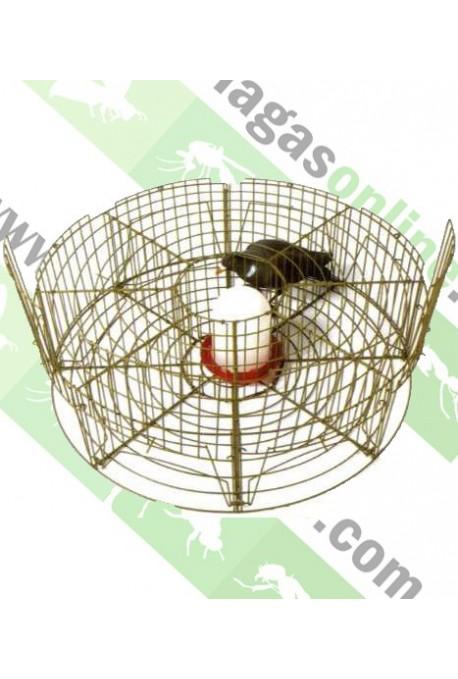 Jaula circular captura palomas