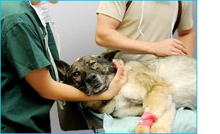 aplicacion clinica veterinaria.jpg