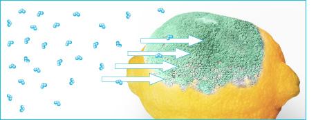 principio activo ozono elimina hongos.jp